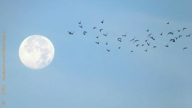 Der Flug zum Mond